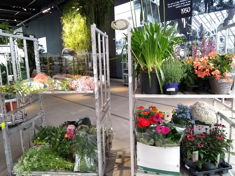 Groen en plantenstyling